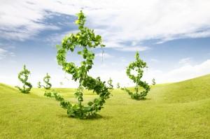 Money - dollar sign bushes