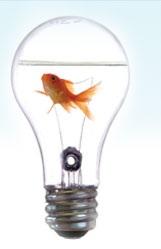idea-fish
