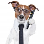 Listening - dog