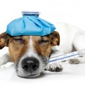 Leadership Influenza – Inoculation Strategies