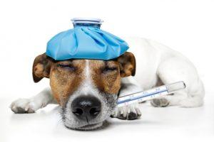 Leadership Influenza - Inoculation Strategies