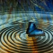 The Butterfly Effect – Are Your Leaders Getting It Wrong?