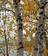 What Can Aspen Teach Us About Collaboration?